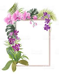 orchids flowers tropical rectangular frame with bouquet pink purple orchids