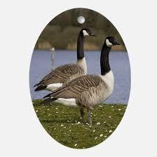 canada goose ornament cafepress