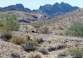 Arizona vegetaion images La paz county arizona wikipedia jpg