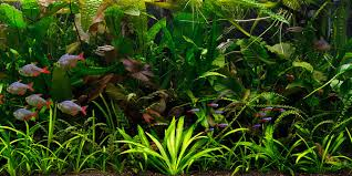 Plants For Aquascaping Understanding Jungle Aquascaping Style The Aquarium Guide