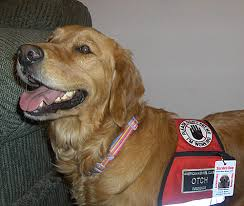 Comfort Dogs Certification Who Has The Authority To Write Or Issue An Emotional Support Dog