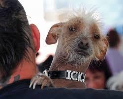 Ugliest World U0027s Ugliest Dogs Photos Abc News