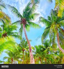 fresh green palm trees beautiful big leaves on blue sky background