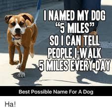 Frowning Dog Meme - 25 best memes about smile smile memes