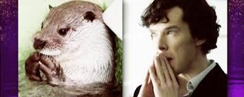 Benedict Cumberbatch Otter Meme - tastefully offensive on tumblr graham norton asks benedict