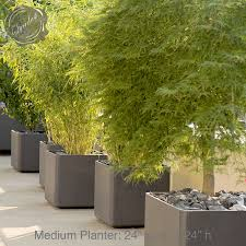 Potted Patio Trees by Tree Planter Pot 5 Inspiring Style For Crassula Potted Plant Money