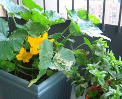 Vegetable Gardening In Pots by How To Grow Fruits Vegetables And Herbs In A Container Garden