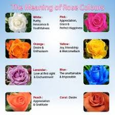 what each color means meaning or rose colors white gold