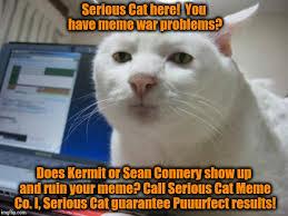 Cat Problems Meme - essayons cat calling meme case study paper writers