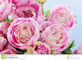Peony Flowers Peony Flowers Royalty Free Stock Photography Image 37259367