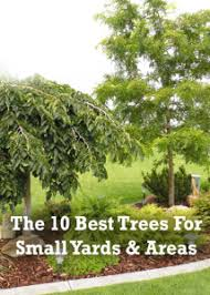 the 10 best trees to grow in small yards or small areas secret