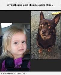 Chloe Little Girl Meme - funny meme my aunts dog looks like side eyeing chloe pincaption