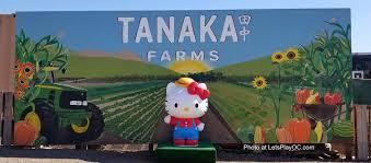 tanaka farms sanrio pumpkin patch kitty u0026 friends