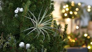 lunch u0026 learn holiday home décor with plants bok tower gardens