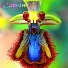 Monkey Orchids 100pcs Orchid Seeds Rare And Beautiful Balcony Garden Bonsai