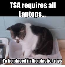 Cat Laptop Meme - tsa requires all laptops to be placed inthe plastictrays grumpy