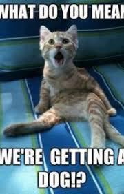 Cat And Dog Memes - funniest cat and dog memes cats wattpad