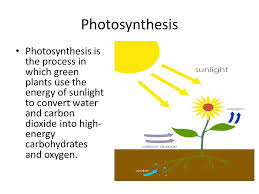 Is Light Energy Photosynthesis Energy And Life Living Things Need Energy To