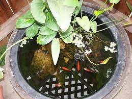 small garden backyard aquariums ideas that will beautify your