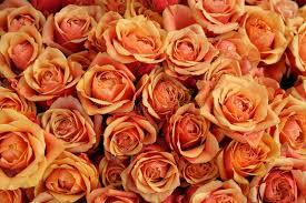 bulk roses bulk of roses on a market stock photo image of bouquet 11485924