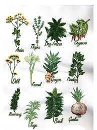seneca snakeroot 86873747 the pdr for herbal medicines