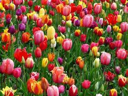 image of spring flowers free stock photos of spring flowers pexels