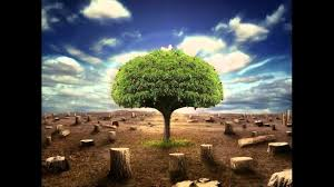 bible study trees of righteousness