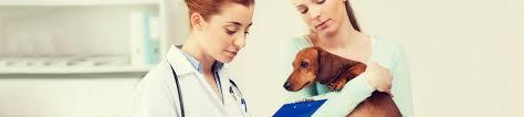 Klinik Am Rosengarten Bad Oeynhausen Tierarzt Informationen Tierbestattung Der Kleintierkrematorium