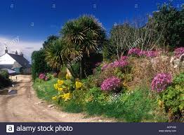 Image Of Spring Flowers by Spring Flowers And Country Lane Bryher Isles Of Scilly Stock Photo