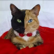 cats color kittens pets