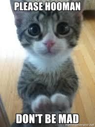 Dont Get Mad Meme - please hooman don t be mad cute cat beggin meme generator
