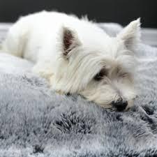 Dog Blankets For Sofa by Luxury Dog Sofa Throws U0026 Blankets The Stylish Dog Company