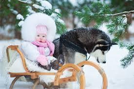 wallpaper husky baby dogs children winter snow animals