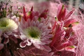 mother u0027s day flower meanings flower pressflower press