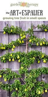 the art of espalier growing fruit trees in small spaces garden