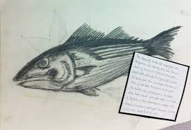 pencil drawing of a fish a level sketchbook hassan cabdi39s