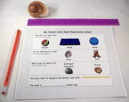 hermit crab shell observation sheet a house for hermit crab by