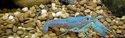 ornamental fish and invertebrates aquaculture business