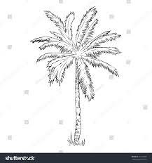 vector single sketch palm tree stock vector 316105028 shutterstock