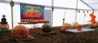 giant singing pumpkins halloween at york maze yorkshire wonders