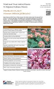 native plants of louisiana problem plant mimosa master gardeners of northern virginia
