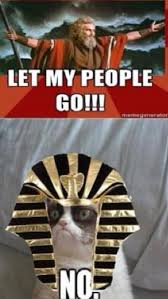 Passover Meme - happy pesach grumpy cat dressed as pharaoh telling moses no
