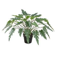 philodendron philodendron philodendron suppliers and manufacturers at alibaba com