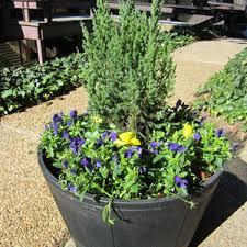 make a whiskey barrel planter u2014the home depot garden club garden club