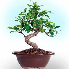 how to make your own bonsai tree nature bring nature bring
