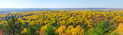fall colors algonquin park ontario royalty free stock
