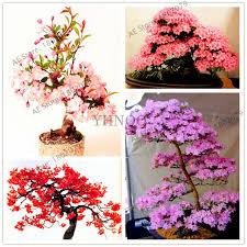 10pcs bag japanese seeds courtyard garden bonsai tree seeds