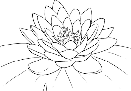 free printable lotus coloring pages kids