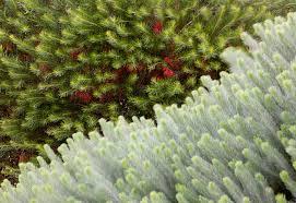 australian native garden plants t c l taylor cullity lethlean projects australian garden