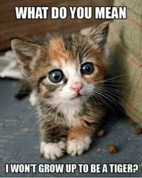 Cute Baby Animal Memes - 37 hilarious animal pictures hilarious animal pictures